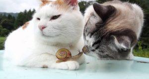 La Gatta Shironeko e la sua amica Lumaca