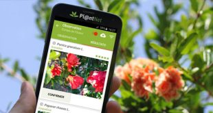 App per riconoscere Fiori, Piante e Foglie: PlantNet