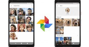 Google Foto è in grado di identificare tutte le foto di cani e gatti