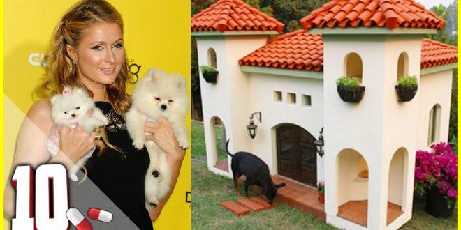 10 Cucce e Case per Cani più Costose al Mondo