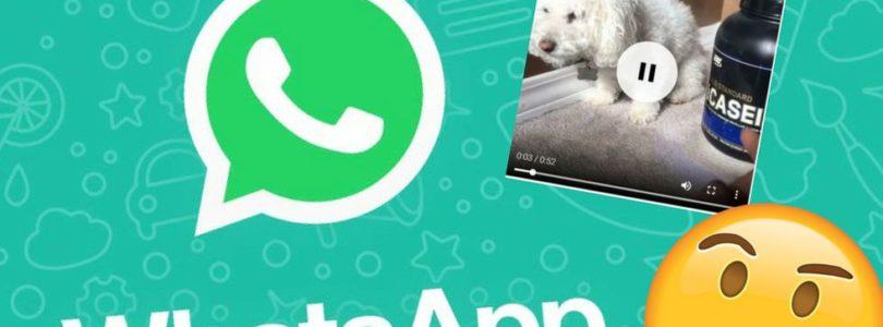 Come scaricare video e foto di WhatsApp sul tuo PC